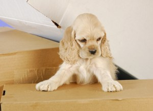 How to keep your dog happy during a move