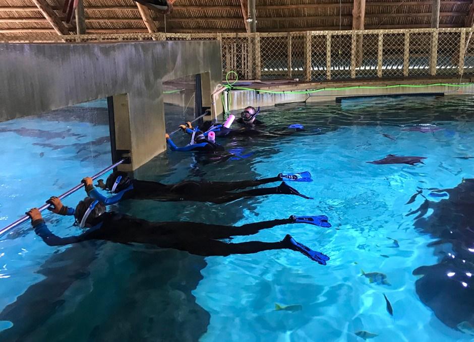 Aquarium Encounters feeding the sharks