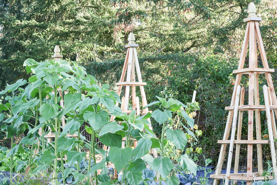DIY French Tuteurs Garden