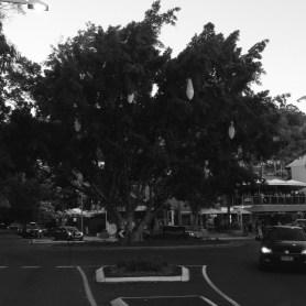 Noosa Tree Of Life (1)