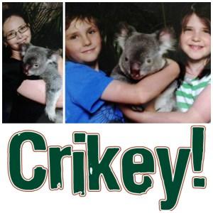crickey 1