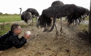 Ostrich pinhole 5
