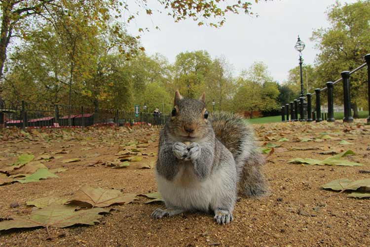 squirrel in Regent's Park - one of 5 best parks in London