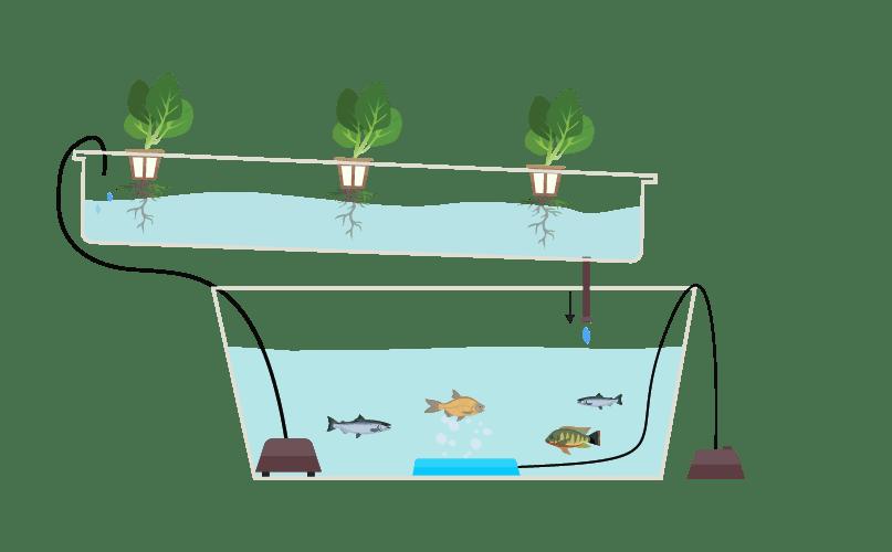 ছাদে মাছ চাষ- অ্যাকুয়াপনিক্স