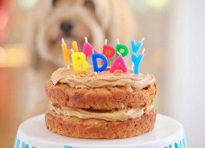 Dog Birthday Cake For Your Furry Friend