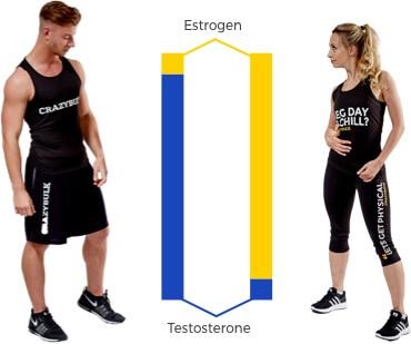 Estrogen vs Testosterone