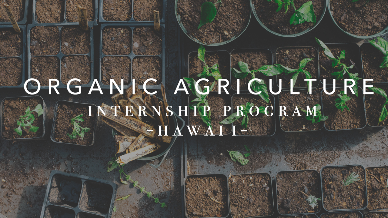 Video About Our Organic Agriculture Internship