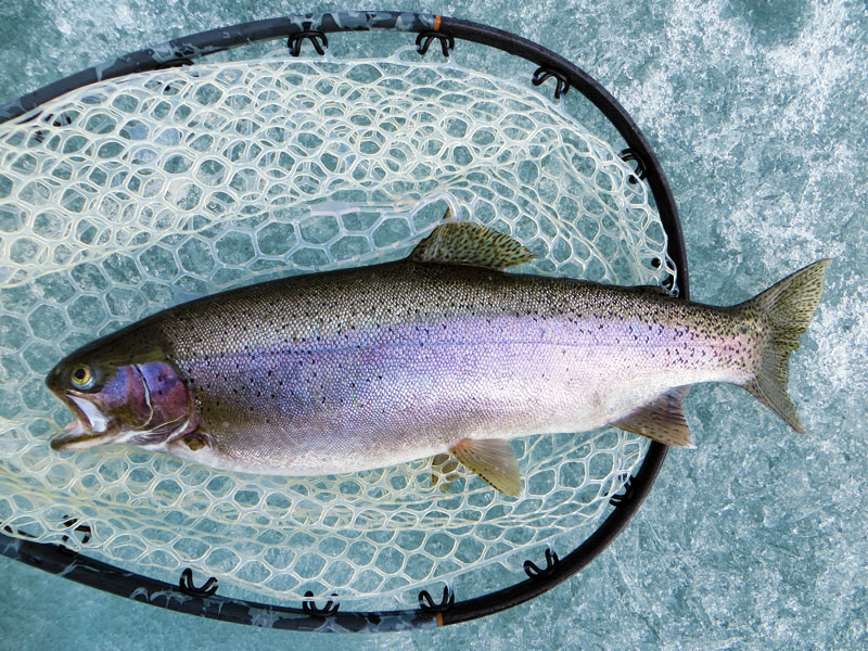 Fly Fishing Rainbow Trout Lake Superior