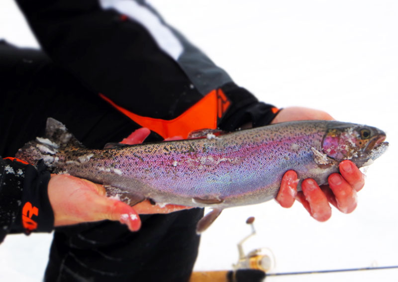 Ice Fishing Rainbow Trout Northern Minnesota