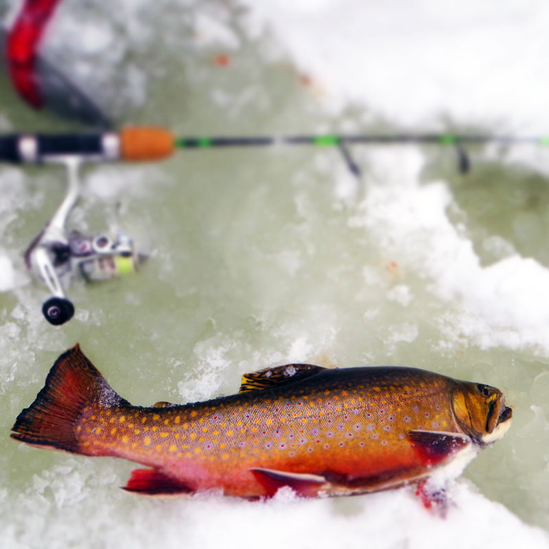 Ice Fishing Brook Trout Northern Minnesota