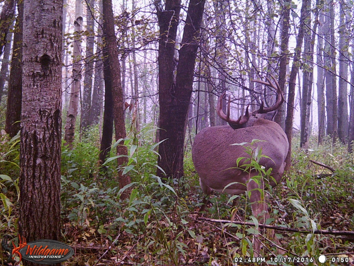 This image was captured three days before I took this deer, over a half mile away.