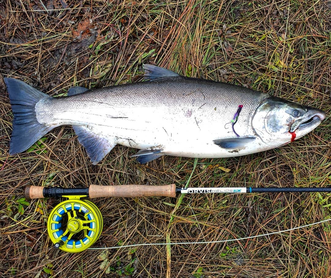 Fly Fishing Silver Salmon Lower Cook Inlet