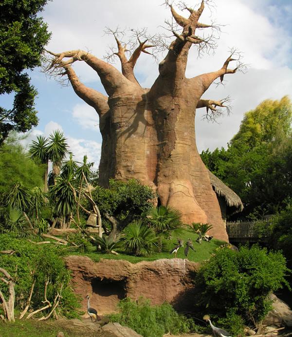 Baobab-Bioparc