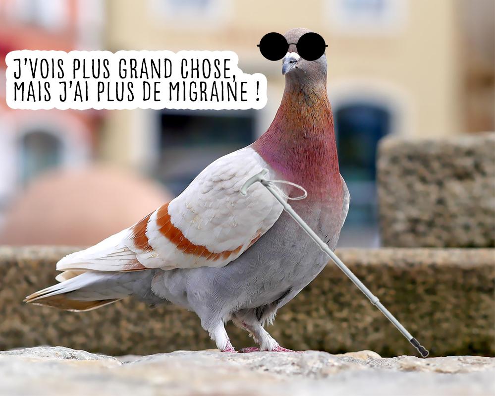 Pourquoi les pigeons balancent la tête