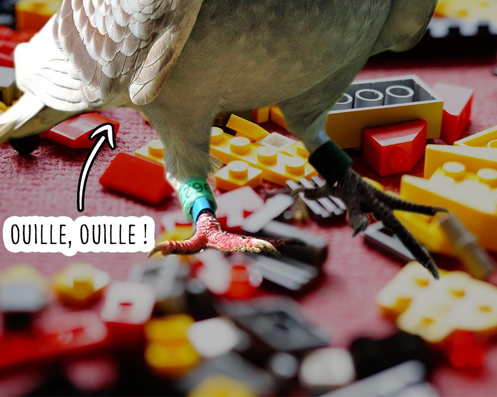 Pourquoi pigeons pattes abîmées