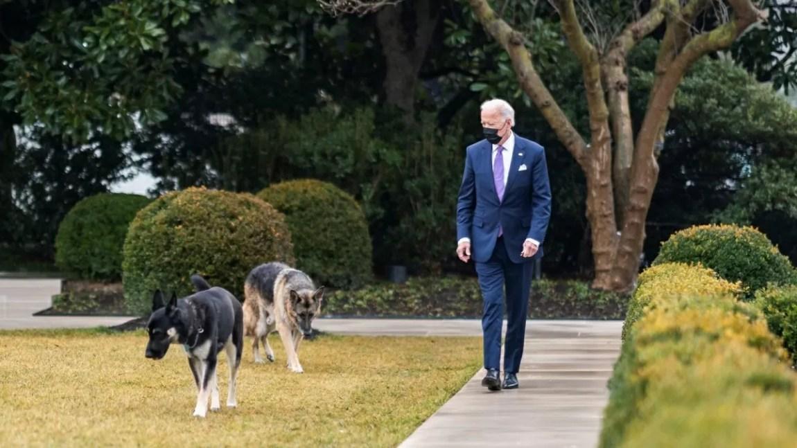 Champ, Joe Biden's dog, is dead