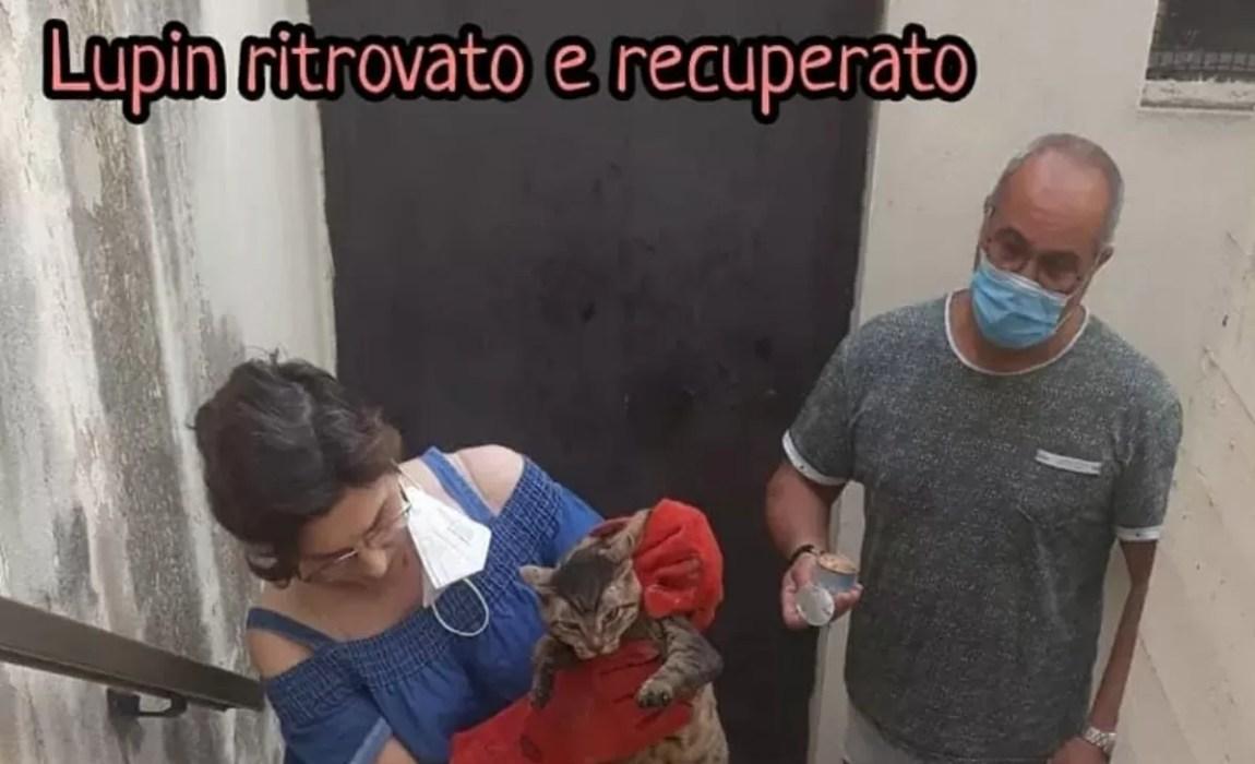Peppino the cat saved