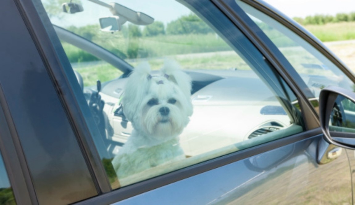 The rescue of a dog in the car