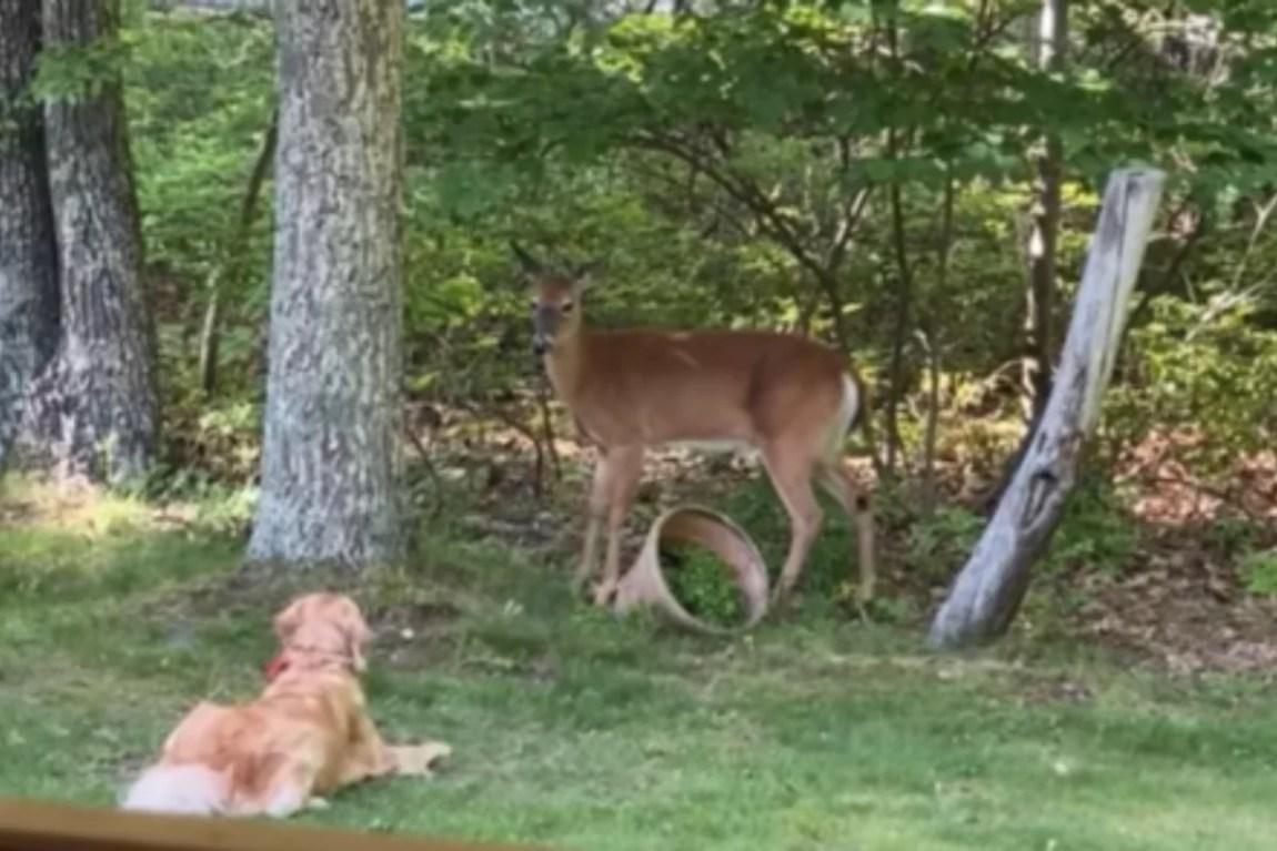 sampson deer