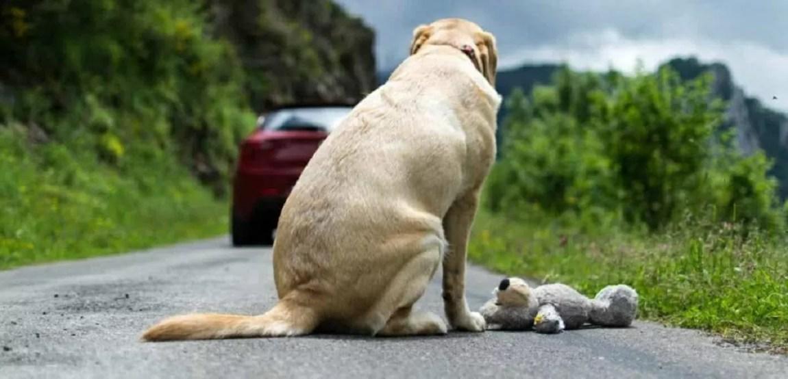abandonment of animals
