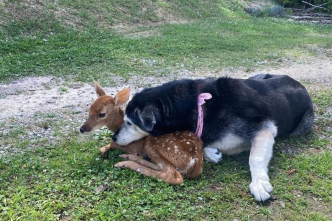 zoey and bambi