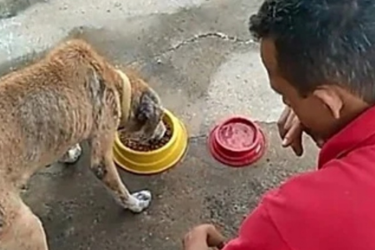 Carlito offers free kibble to homeless dogs