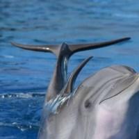 Delfini che dormono con un occhio aperto