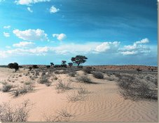 South African vacations in the Kgalagadi Frontier Park