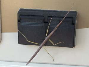 Stick Bug Looking for an Outlet