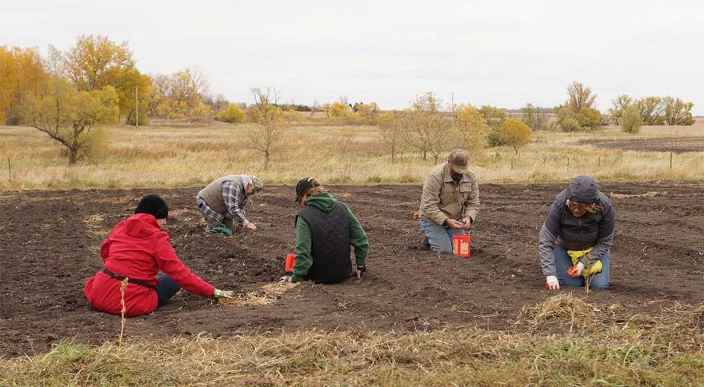 Cousins planting hardneck garlic in October