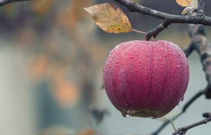 Mistrust, Relationships, Forbidden Fruit