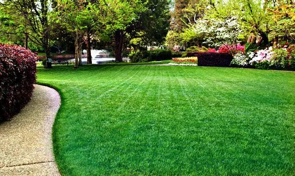 A Proven Process to Create a Beautiful Green Lawn In Colorado