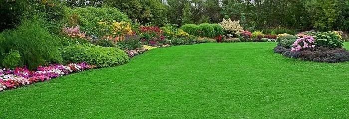 Fescue Lawn Care