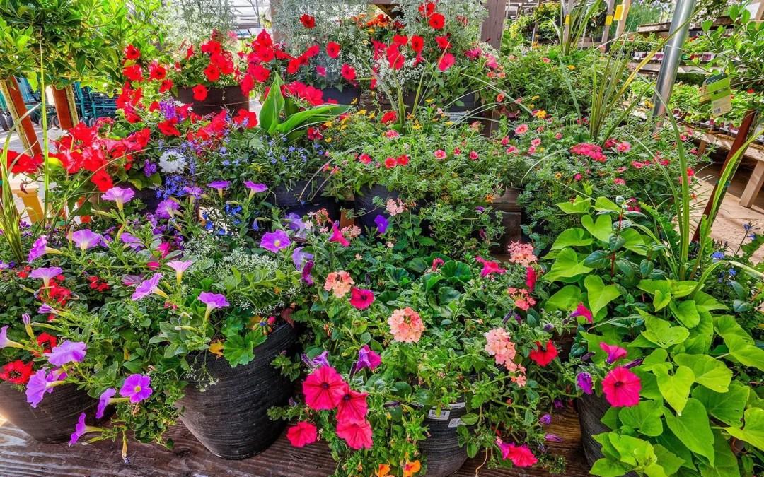 The Secrets To Successful Annual Flower Feeding