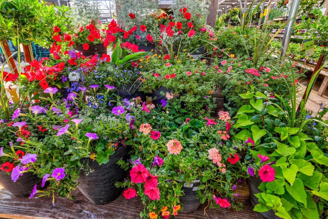 Plants on sale at the Highlands Garden Center