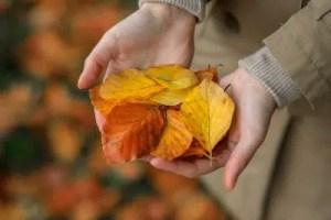 Prepare Your Yard for Fall Planting Season