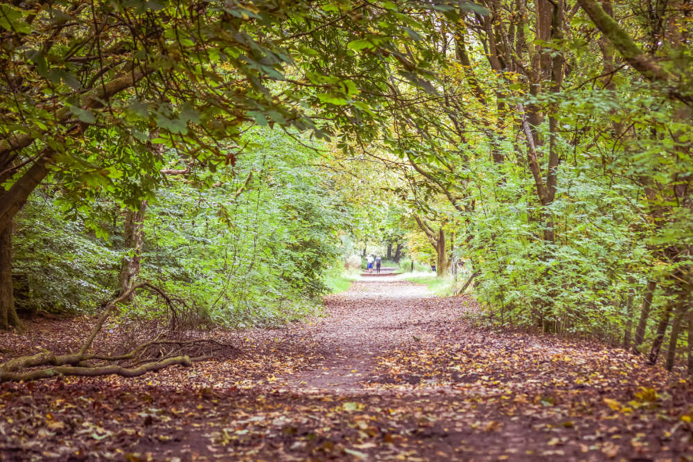 Autumn time in Rivington