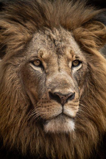 De Koning, Leeuw en koningsdag