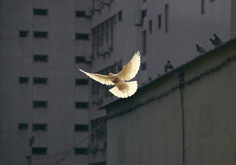 Vliegende duif, teken van de Heilige Geest