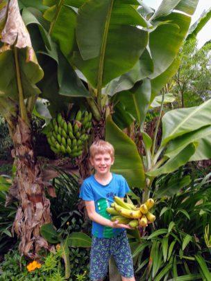 Natuurgerijpte bananen, wat hebben we die gemist!