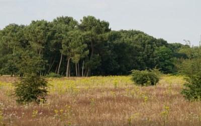Bijenbaas locatie Schaijk – Provincie Brabant