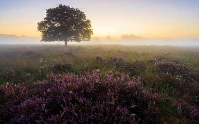 Bijenbaas locatie Enschede – Provincie Overijssel