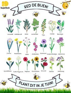 Planten Voor Bijen.Red Bijen Plant Bloemen Bijenbaas