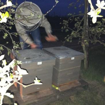 Bijen naar het fruit 2016