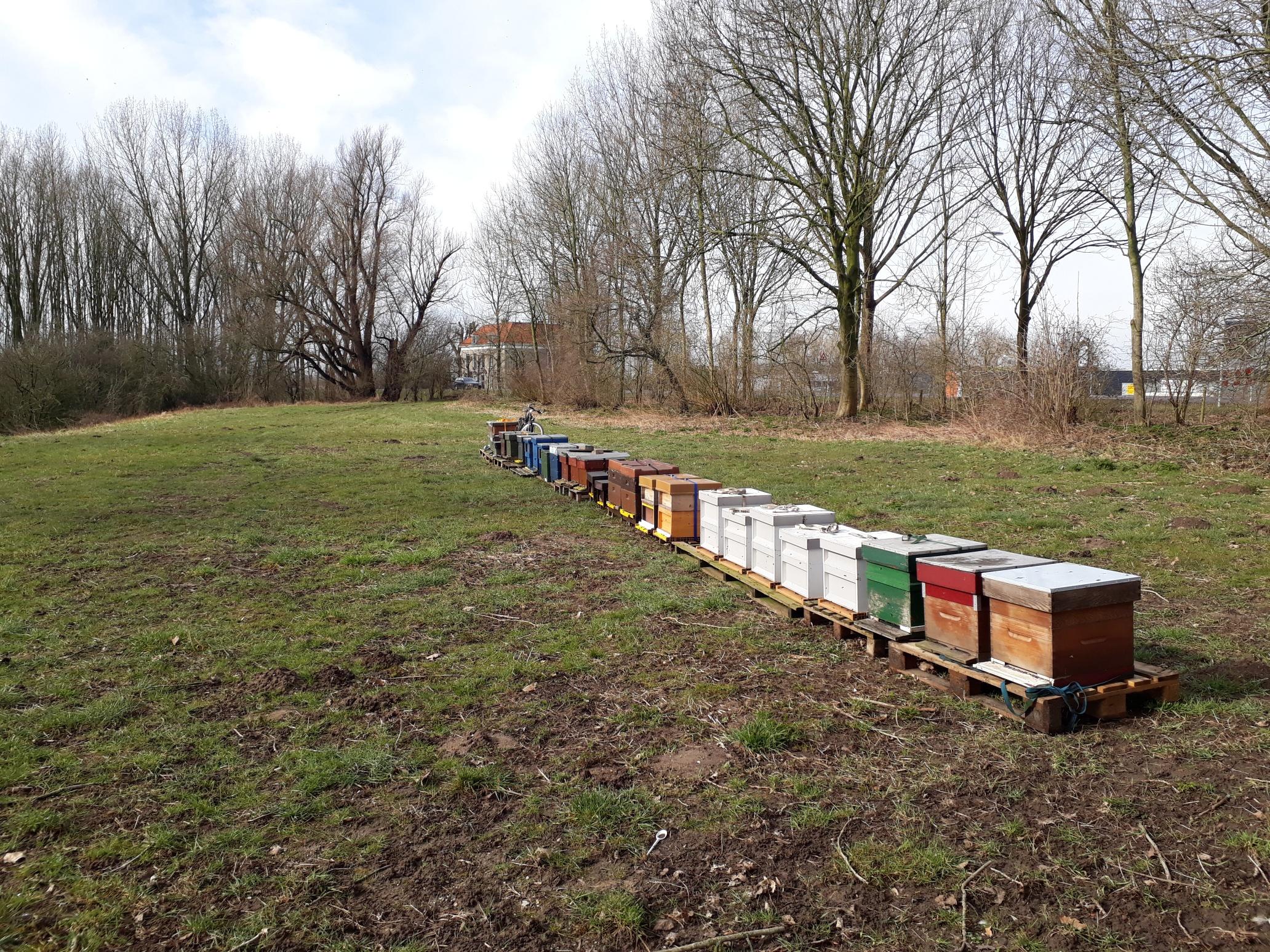 Bijen op de Wilg