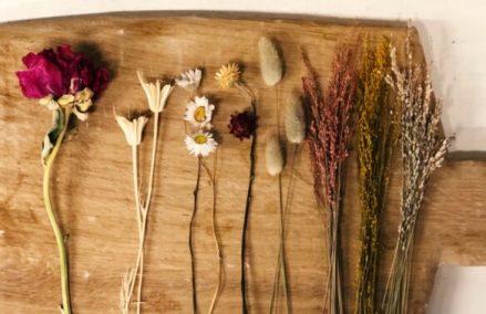 Daffies DIY shoplog droogbloemen stolp