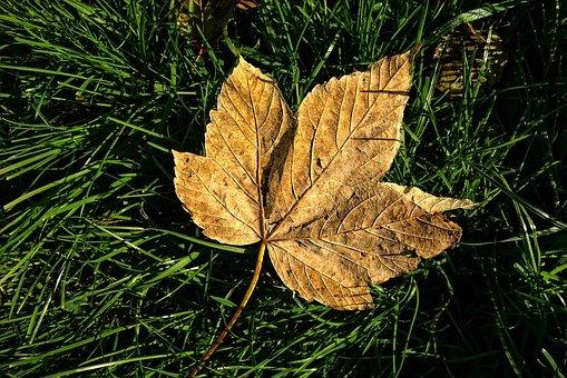 herfstbladeren in je tuin
