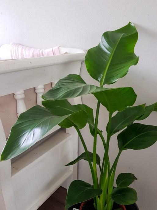 luchtzuiverende planten voor een gezond klimaat in huis