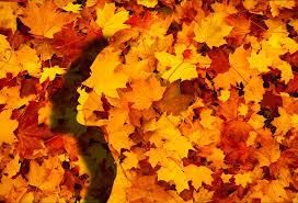 Gezicht herfst