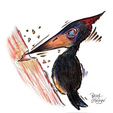 The woodpecker that did drugs